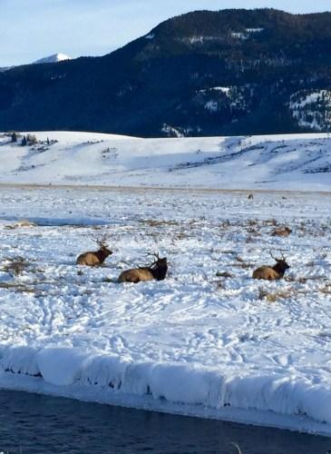 Moran - Wyoming, December 31, 2015 - 17 of 30