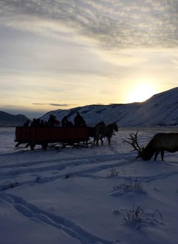 Moran - Wyoming, December 31, 2015 - 20 of 30