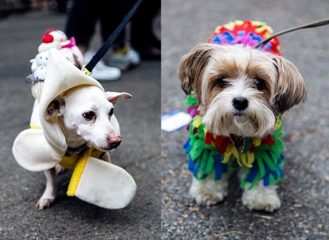 Exposure | Halloween Dog Parade