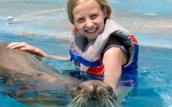dolphin and sea lions oahu Hawaii