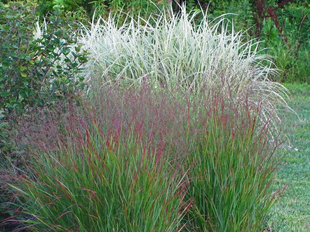 Dividing an ornamental grass the obsessive neurotic gardener for Ornamental garden