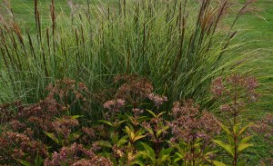 miscanthus and pye