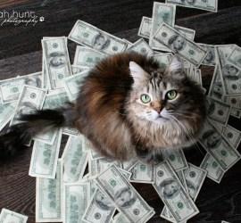 Jo_Money