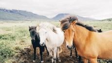 horses-2971-830x550