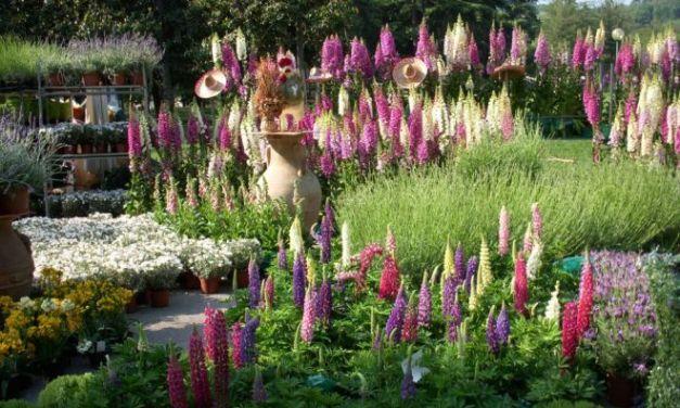 Da sabato al via la rassegna Coniolo fiori