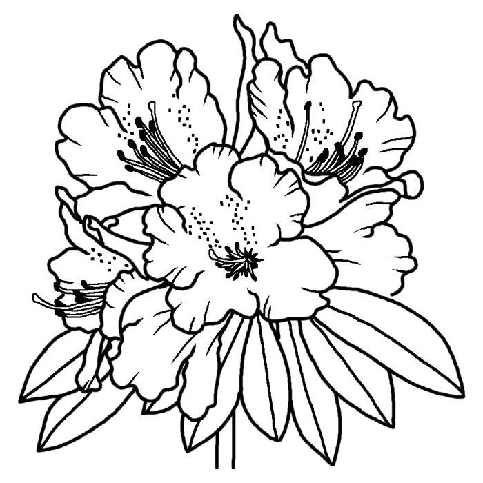 Download 白黒の花のイラスト 白黒 Free