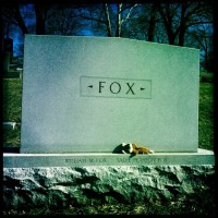 Hot Dogs, Dead Foxes & Shooting Silk
