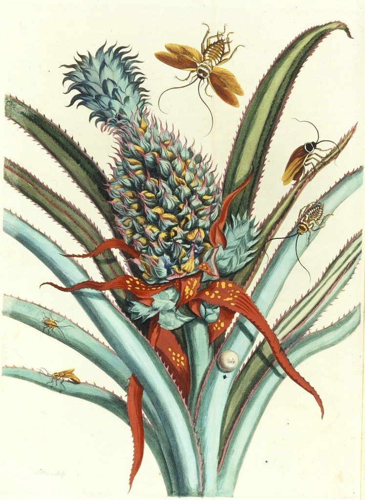 Maria Sibylla Merian, Plate 1 from Dissertation in Insect Generations and Metamorphosis in Surinam, 1719; Hand-colored engraving on paper; Gift of Wallace and Wilhelmina Holladay