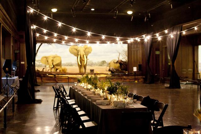 modern natural history museum wedding   jennifer roper