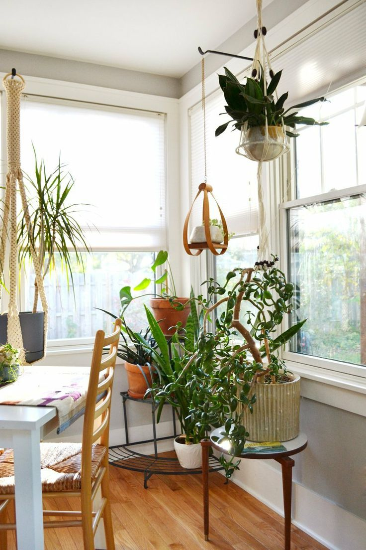 Hanging Indoor Plant Inspiration | Oh Lovely Day