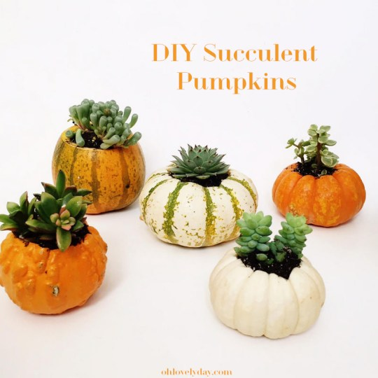 These DIY succulent pumpkins combine are so easy to make and so fun for fall decorating and gifting! A must pin and make!