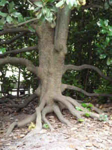 DEVELOP YOUR ROOTS