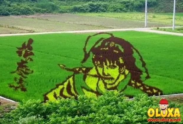 arte em plantação de arroz (20)