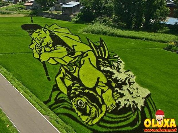 arte em plantação de arroz