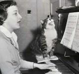 gato cantor