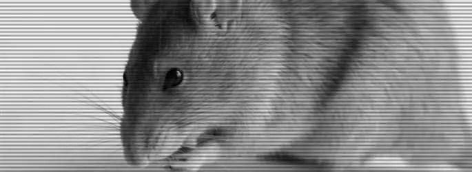 Muitos ratos em casa? Essa dupla vai resolver o seu problema!
