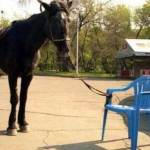 horse-tied-to-chair-square jpg