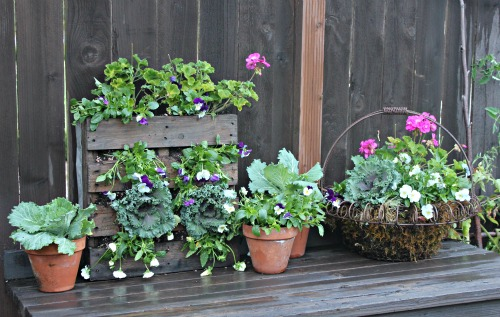 potting bench pictures ornamental cabbage