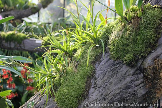 orchids growing on tree stump