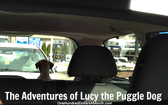 the adventures of lucy the puggle dog