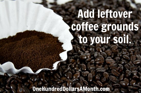 Garden tips add leftover coffee grounds to your soil