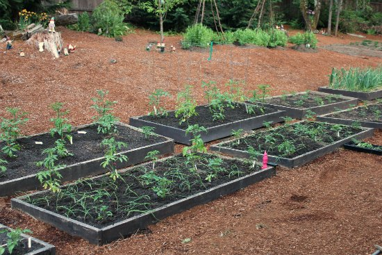 companion planting tomatoes carrots onions