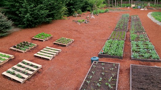 organic gardening raised garden bed pictures
