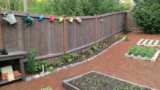 growing vegetables along a fence