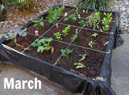 how to plant a wood pallet garden