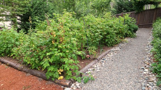 western washington raspberry patch