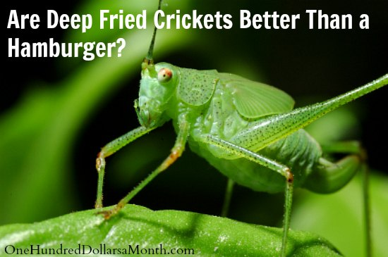 Are Deep Fried Crickets Better Than a Hamburger