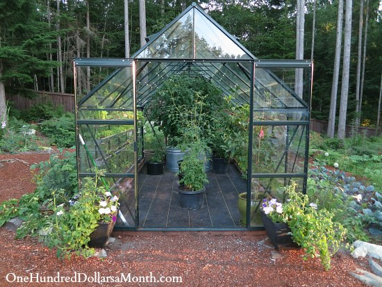 magnum glass greenhouse green