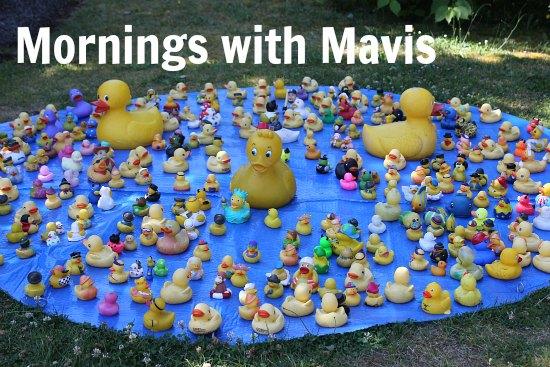 rubber ducks in pond