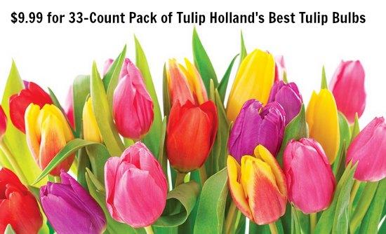 buy tulip bulbs online