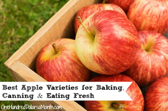 Best Apple Varieties for Baking, Canning and Eating Fresh