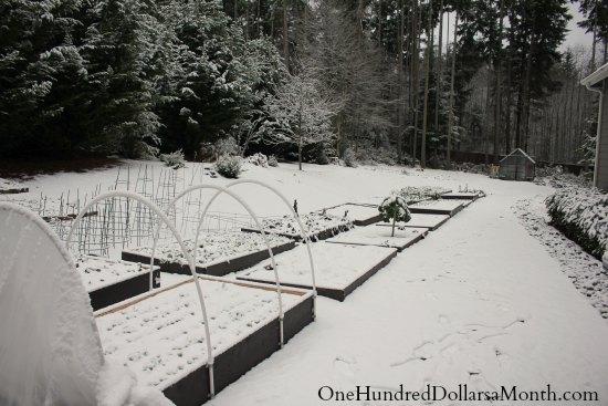 garden boxes in winter