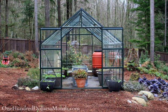 magnum glass greenhouse winter