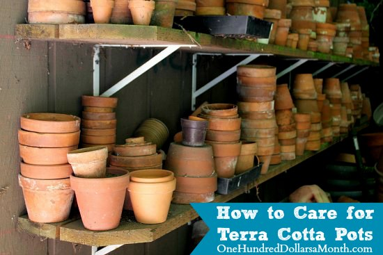 How to Care for Terra Cotta Pots