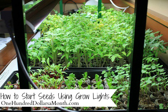 How to Start Seeds Using Grow Lights