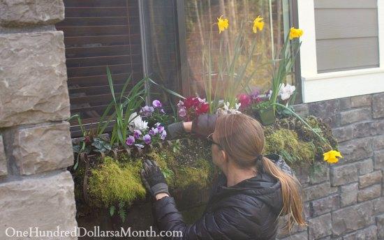 window box flowers spring