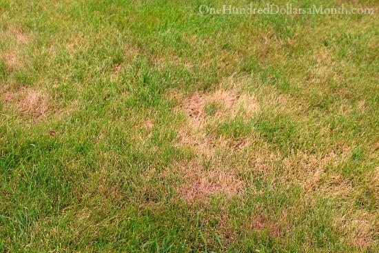 brown spots on lawn