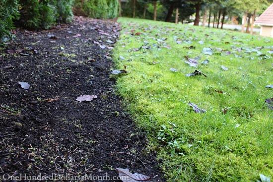 backyard full of moss
