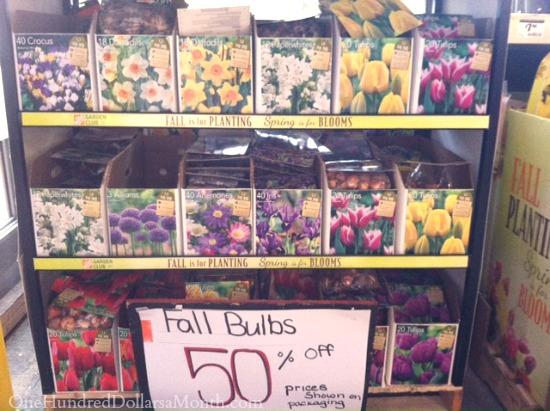 fall bulbs on sale