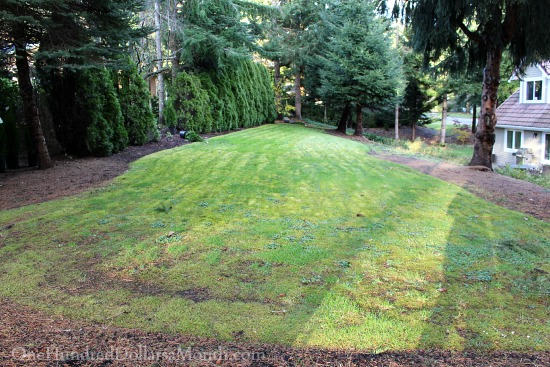garden plot before pictures