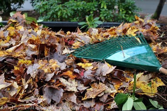 leaves fall rake