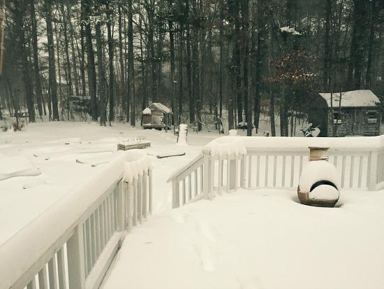 garden under 2 feet of snow