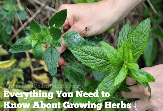 Everything You Need to Know About Growing Herbs