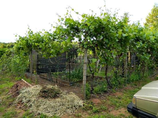 Abigail farm pictures8