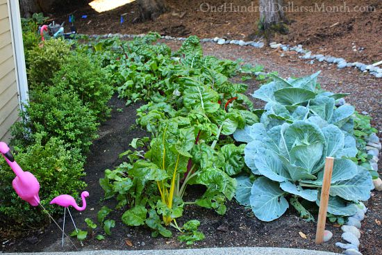 cool season vegetables