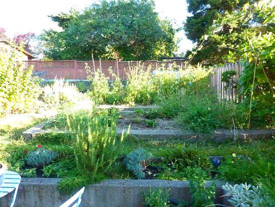 backyard garden photos
